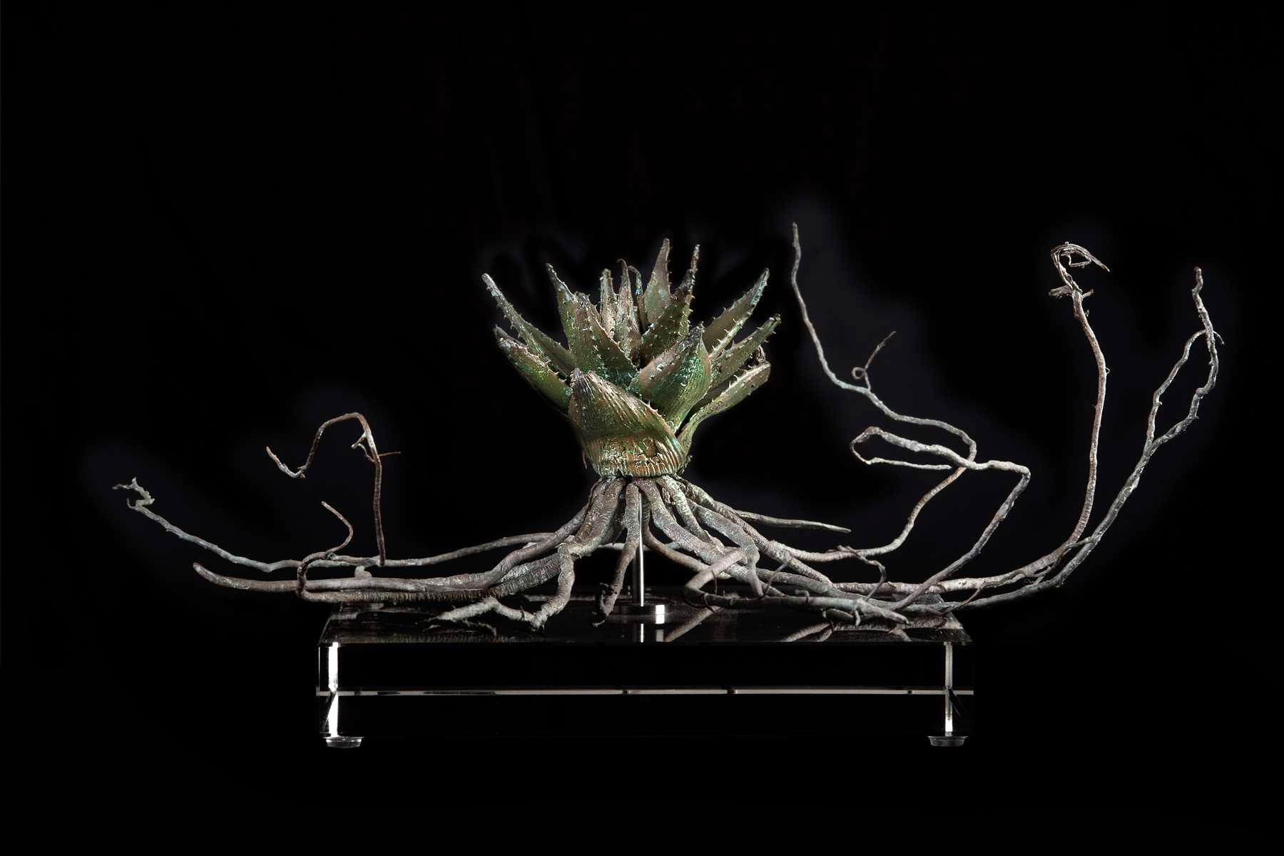 <i>Aloe sp. i </i>