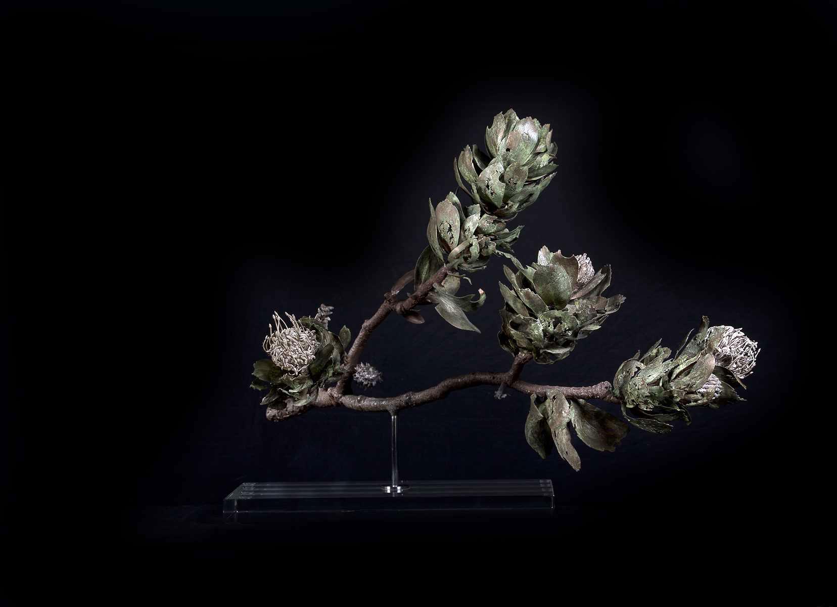 <i>Leucospermum conocarpodendron</i>