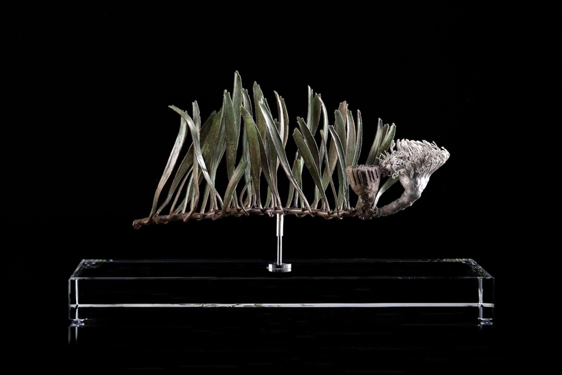 <i>Leucospermum hypophyllocarpodendron</i>