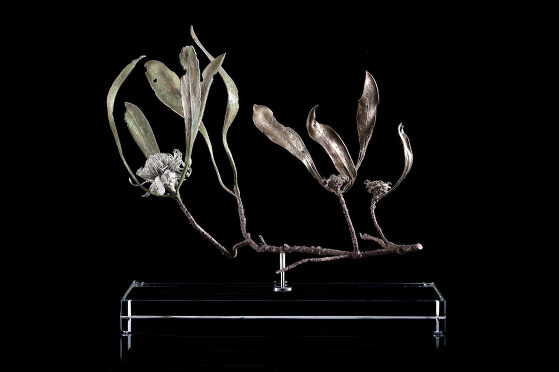 <i>Protea acaulus </i>