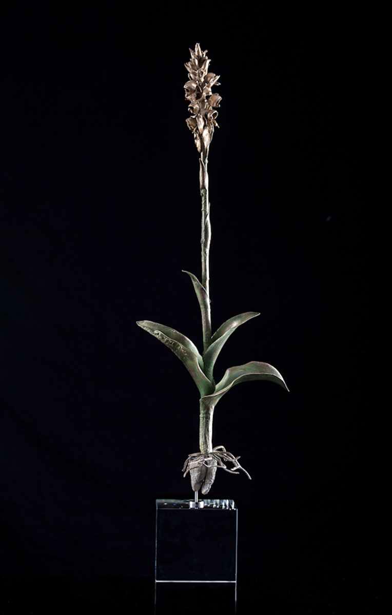<i>Satyrium coriifolium</i>