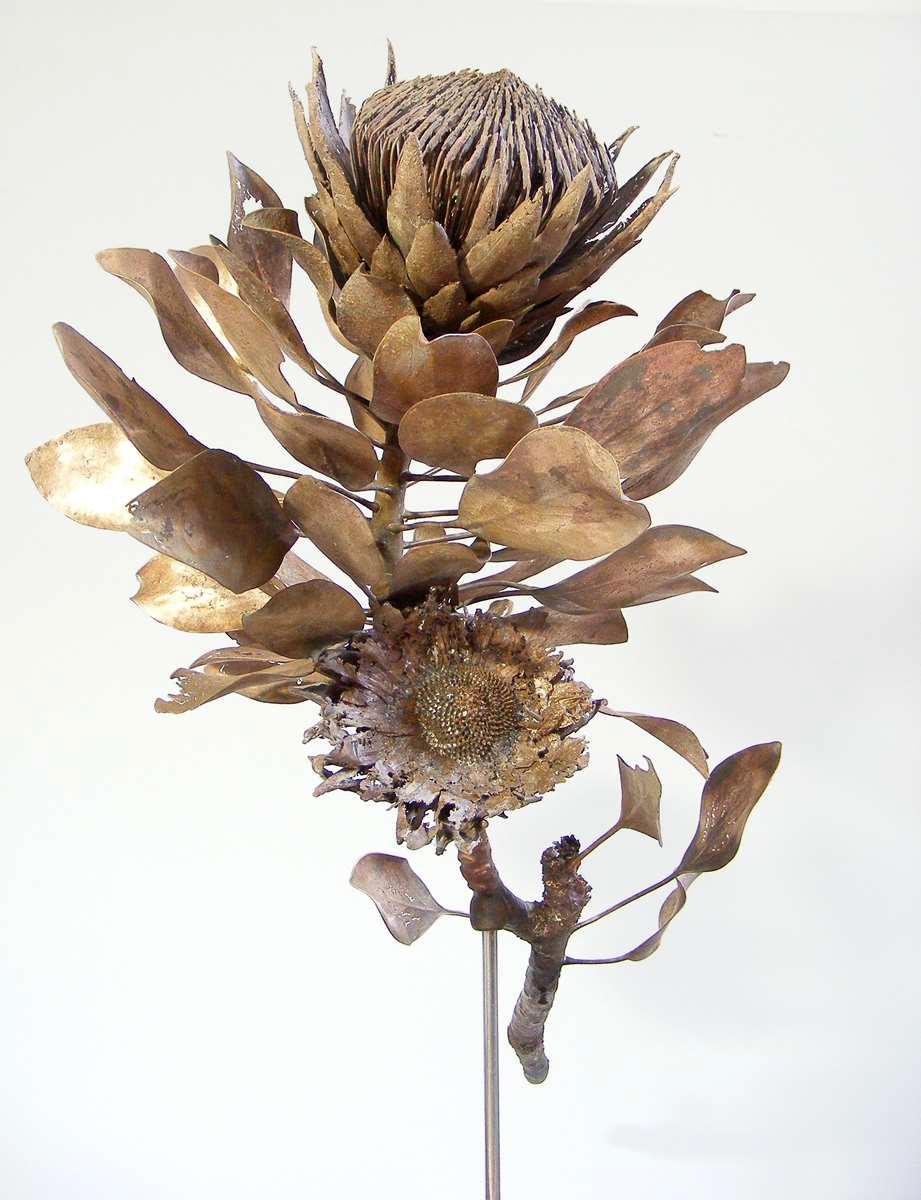 <i>Protea cynaroides</i>