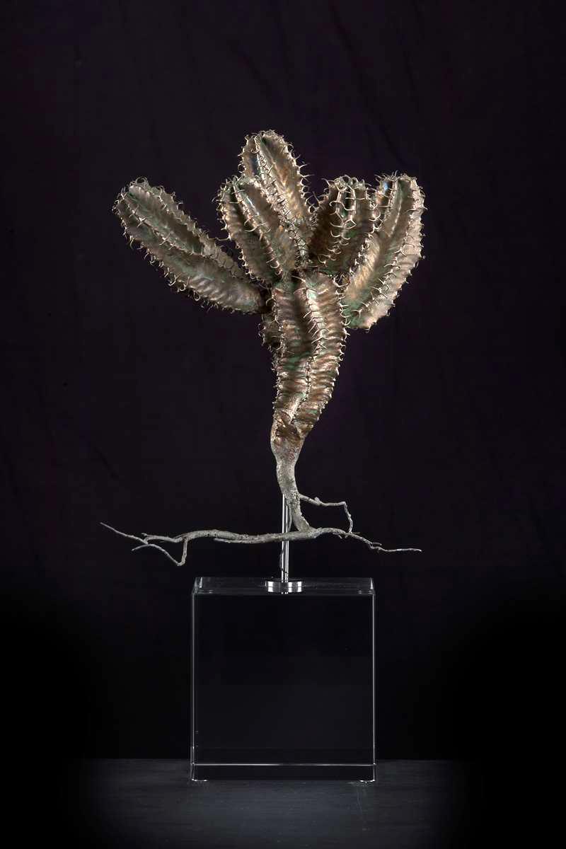 <i>Euphorbia avas-montana</i>