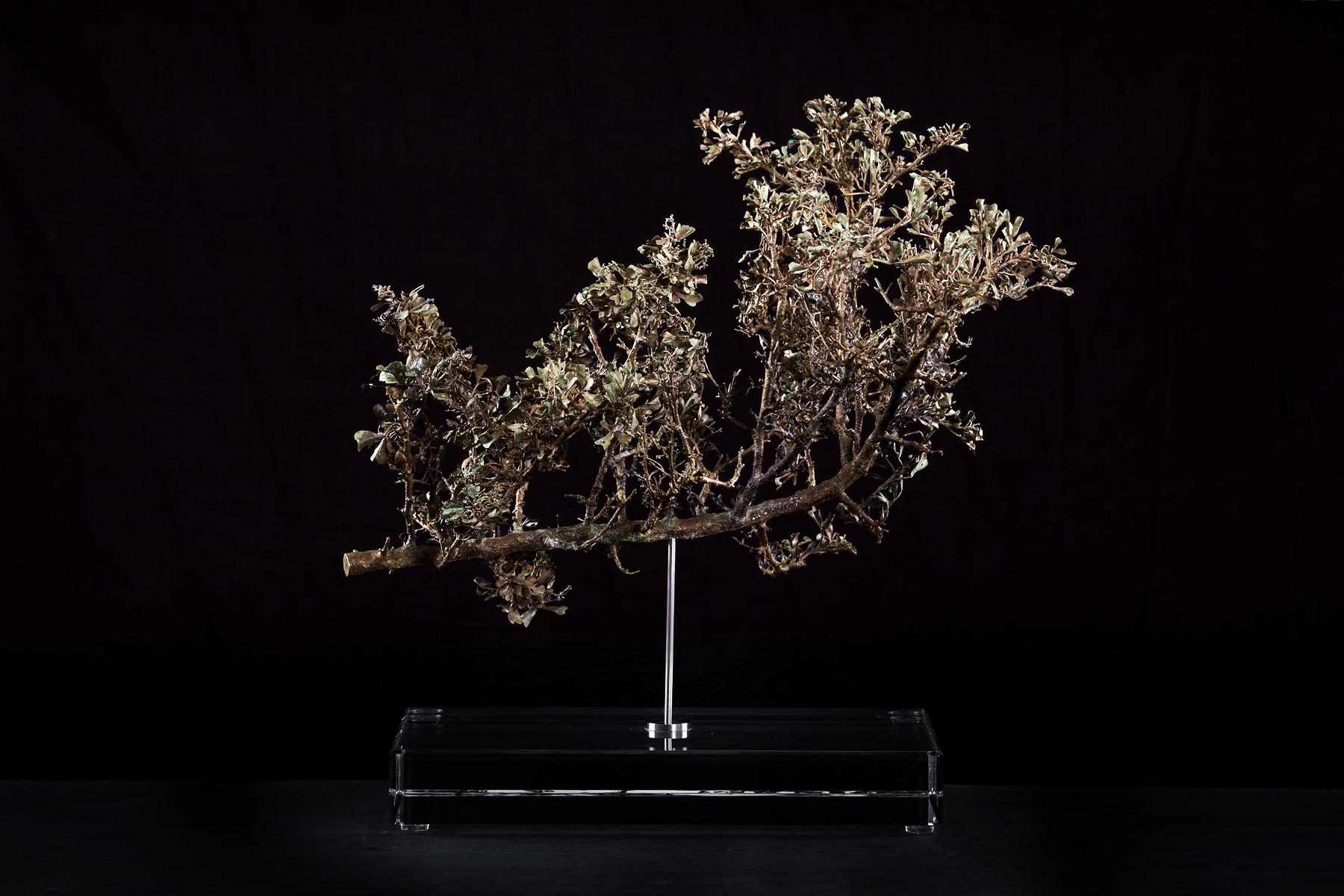 <i>Searsia burchellii</i>