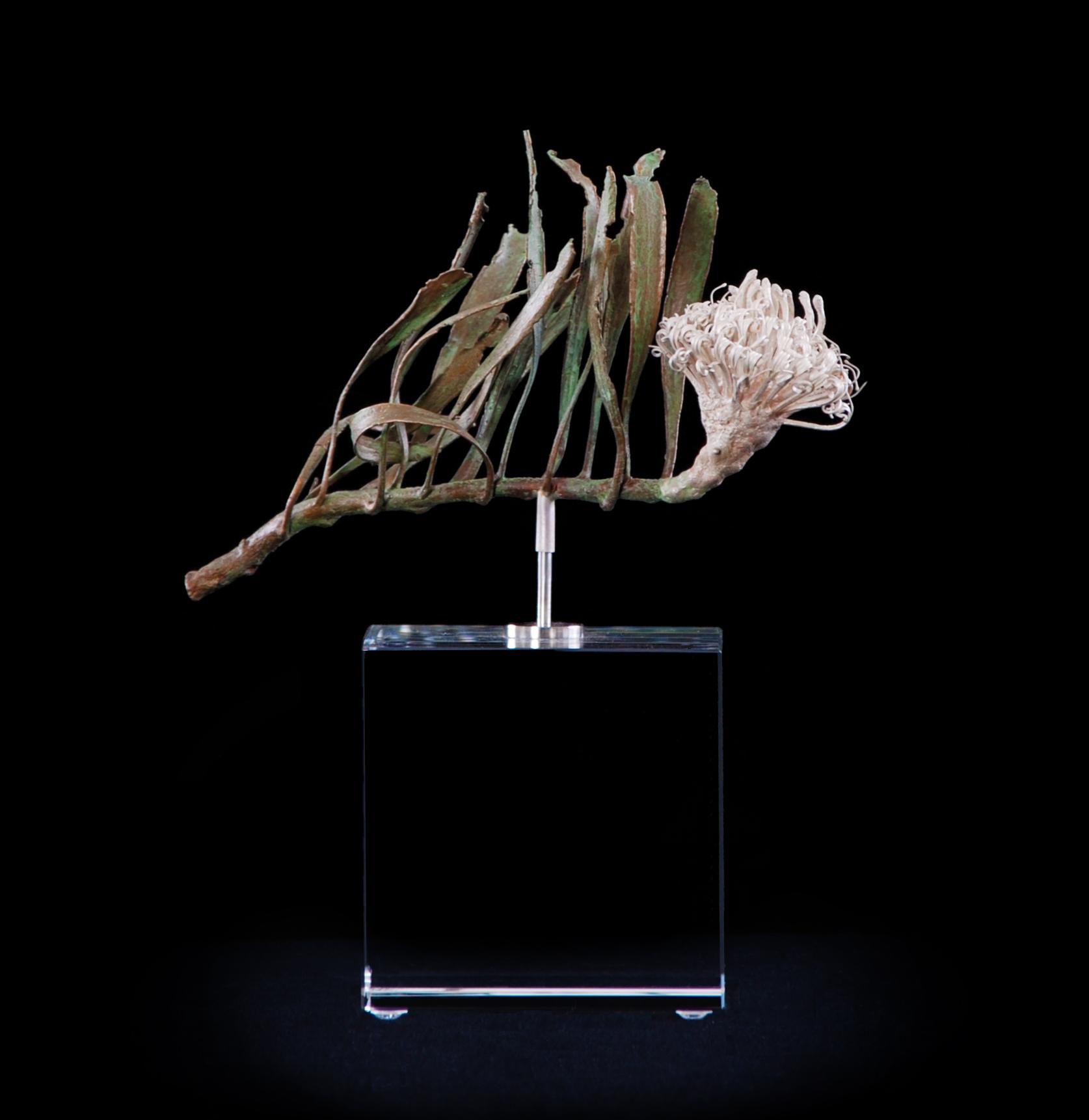 <i> Leucospermum hypophyllocarpodendron </i>