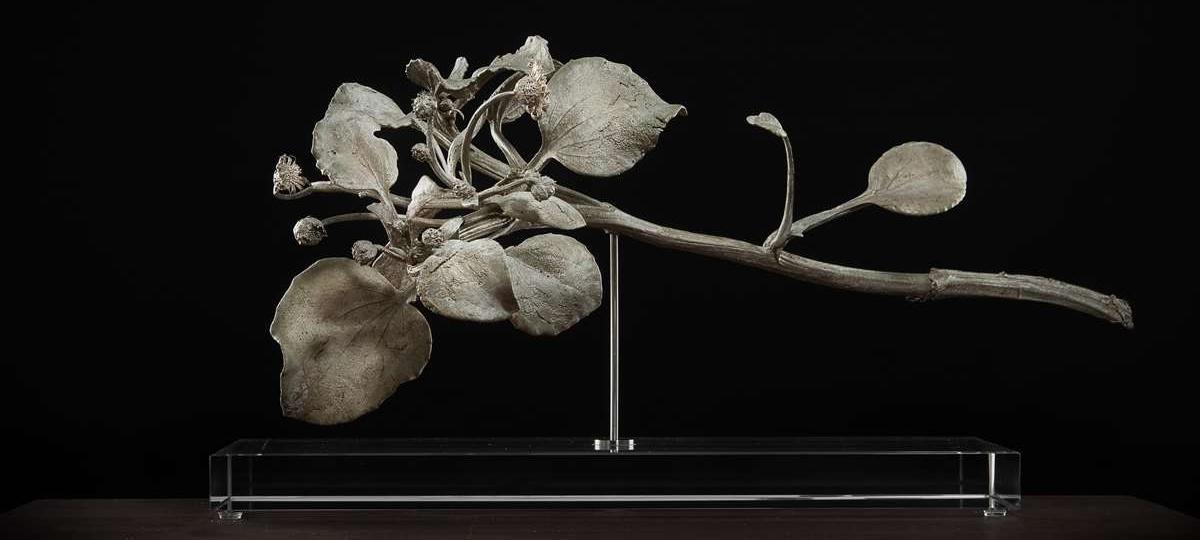 NicBladen_Botanicals_Black_(Arctotheca populifolia)1022.jpg