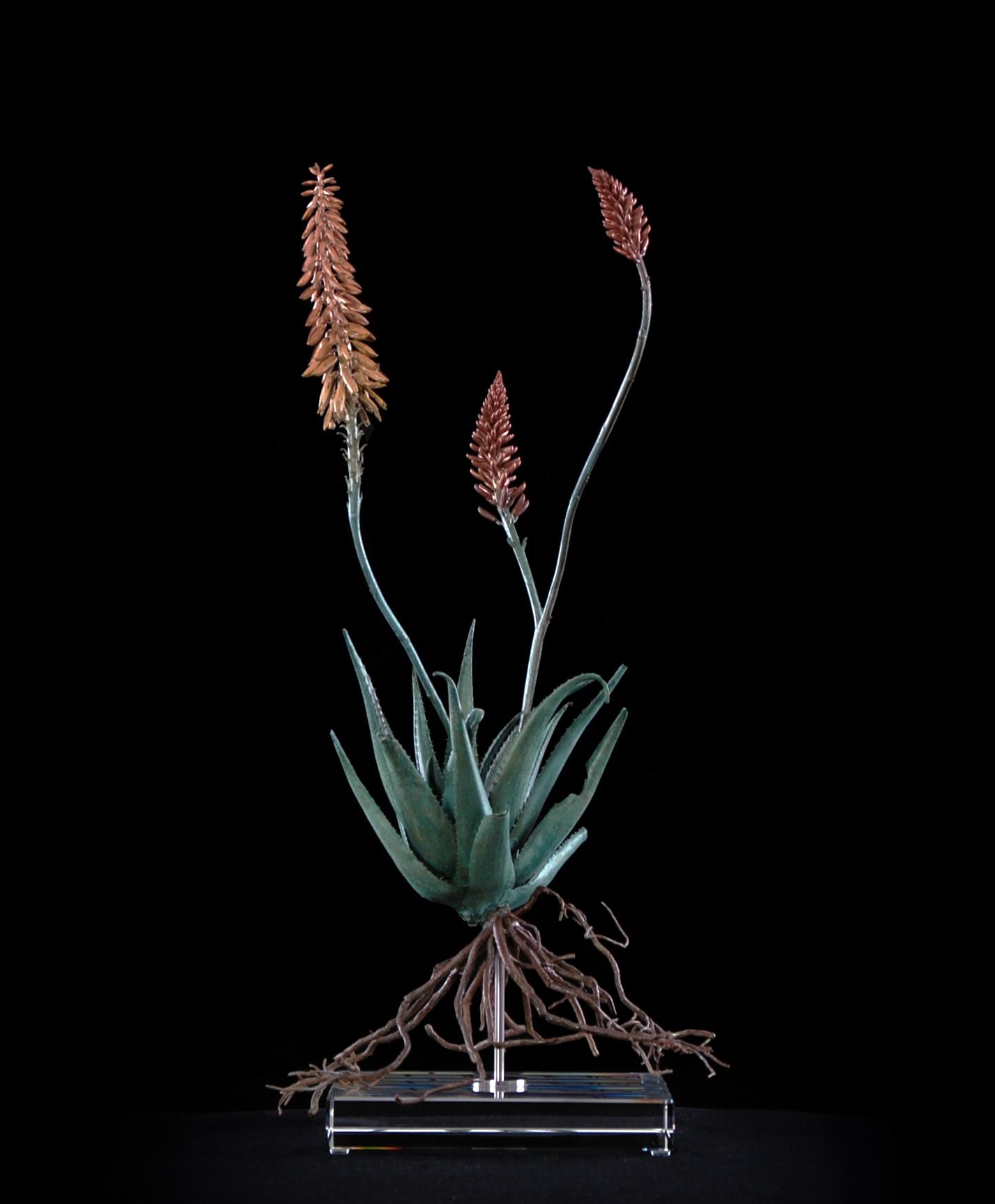 <i>Aloe pluridens x (iv)</i>