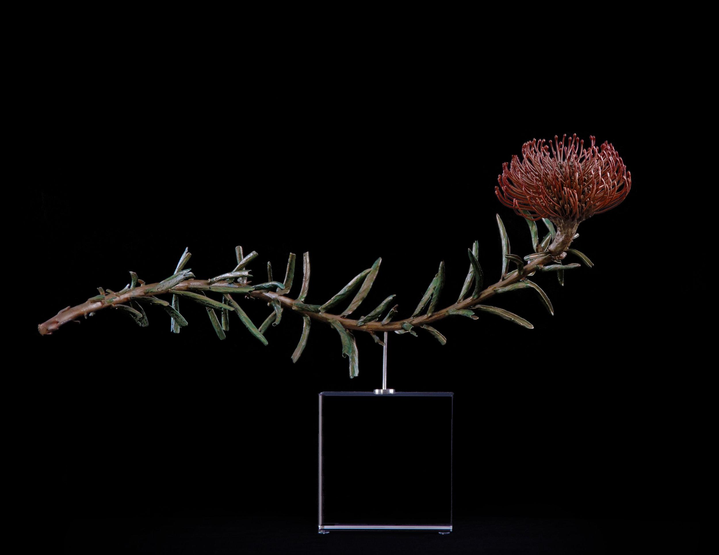 <i>Leucospermum cordifolium X linear </i>