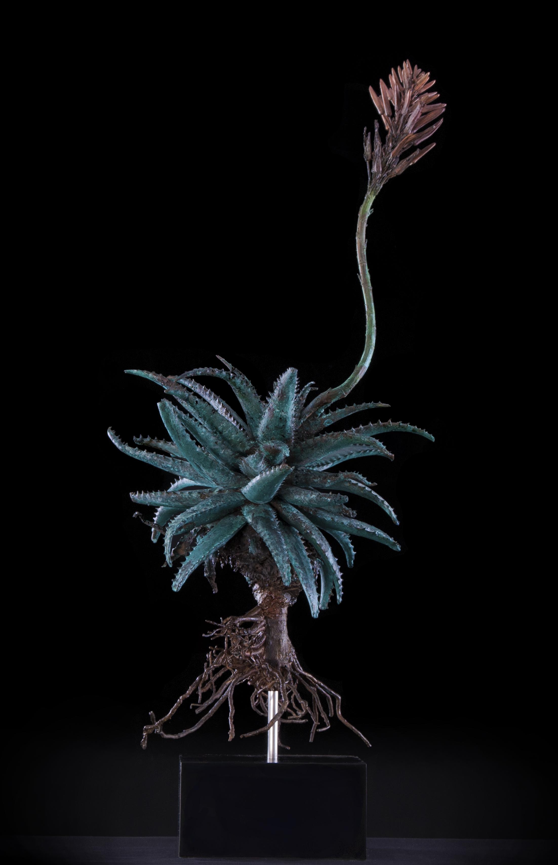 <i>Aloe gemini</i>