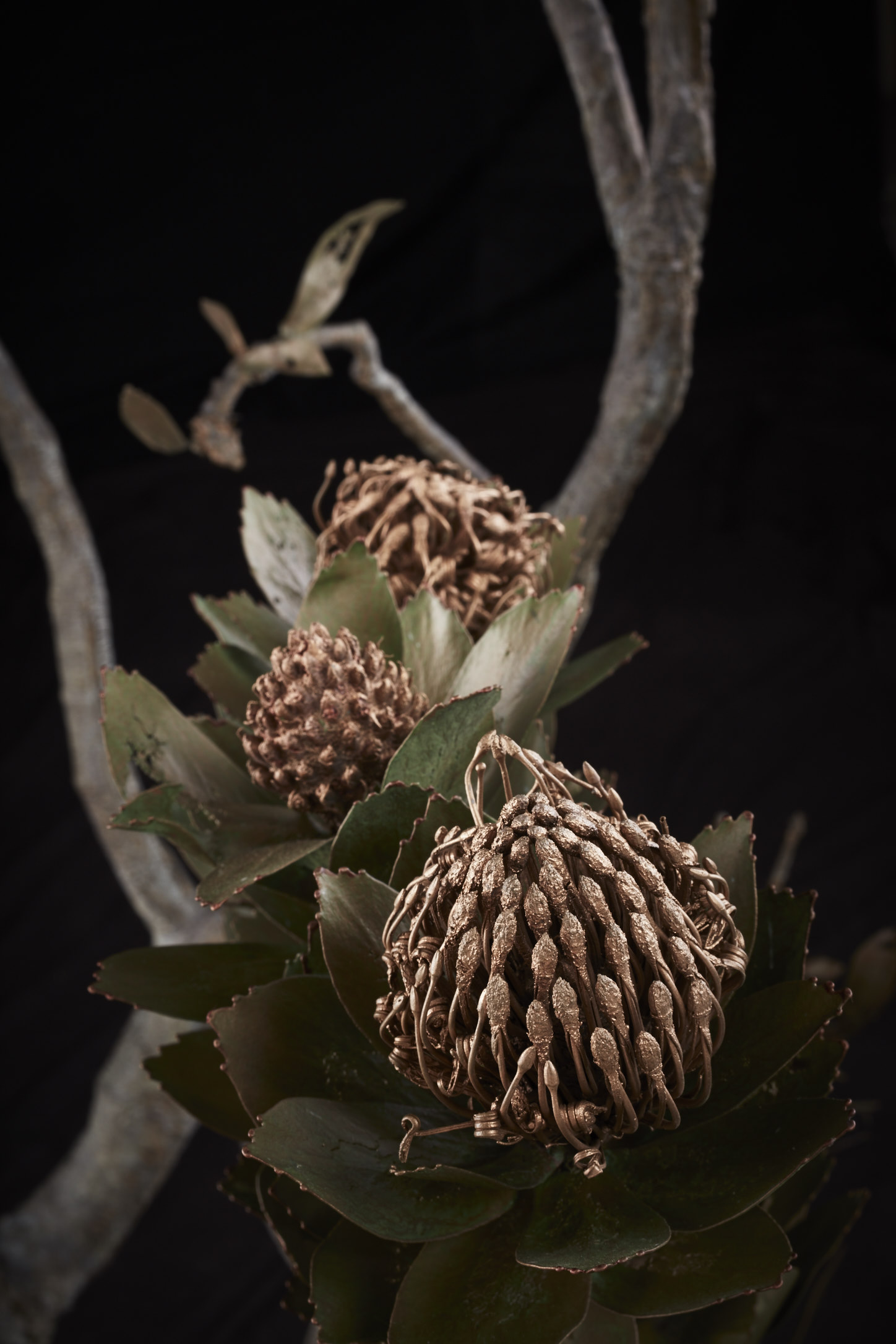 NicBladenBotanicals_LondonEX_Leucospermum conocarpodendron II_6308.jpg