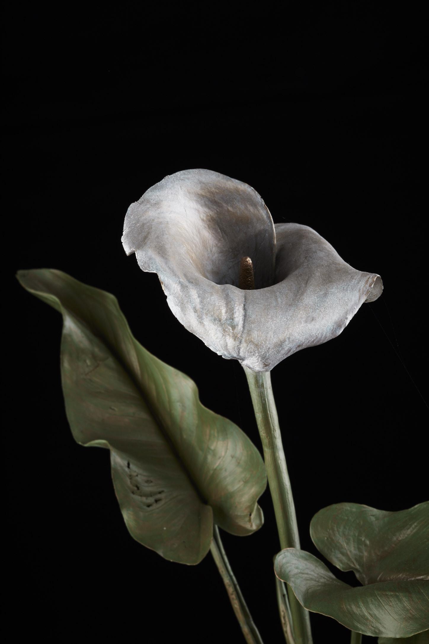 NicBladenBotanicals_LondonEX_Zantedeschia aethiopica(arum)_6072.jpg