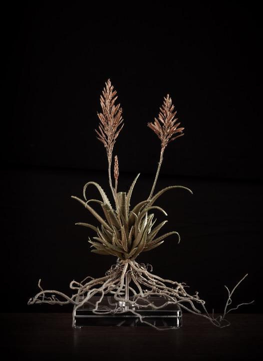 <i> Aloe Hybrid Joker</i>