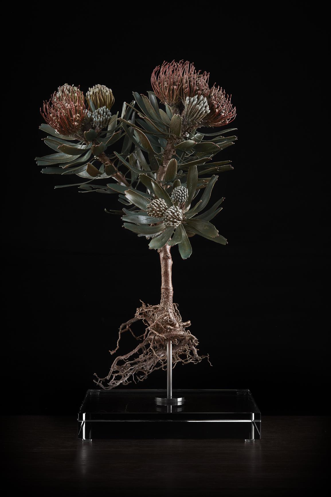 <i> Leucospermum erubescens </i>