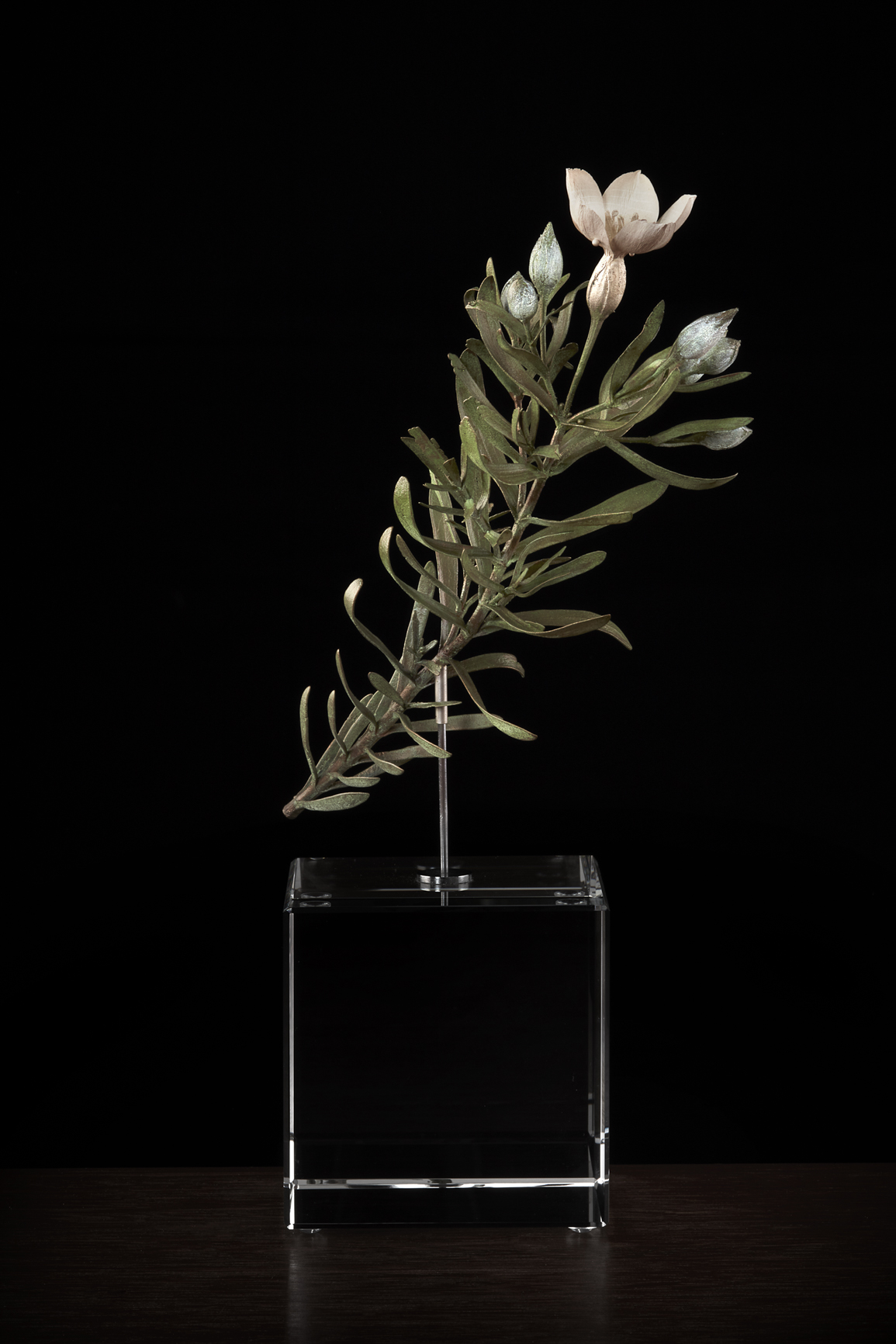 <i> Orphium frutescens </i>