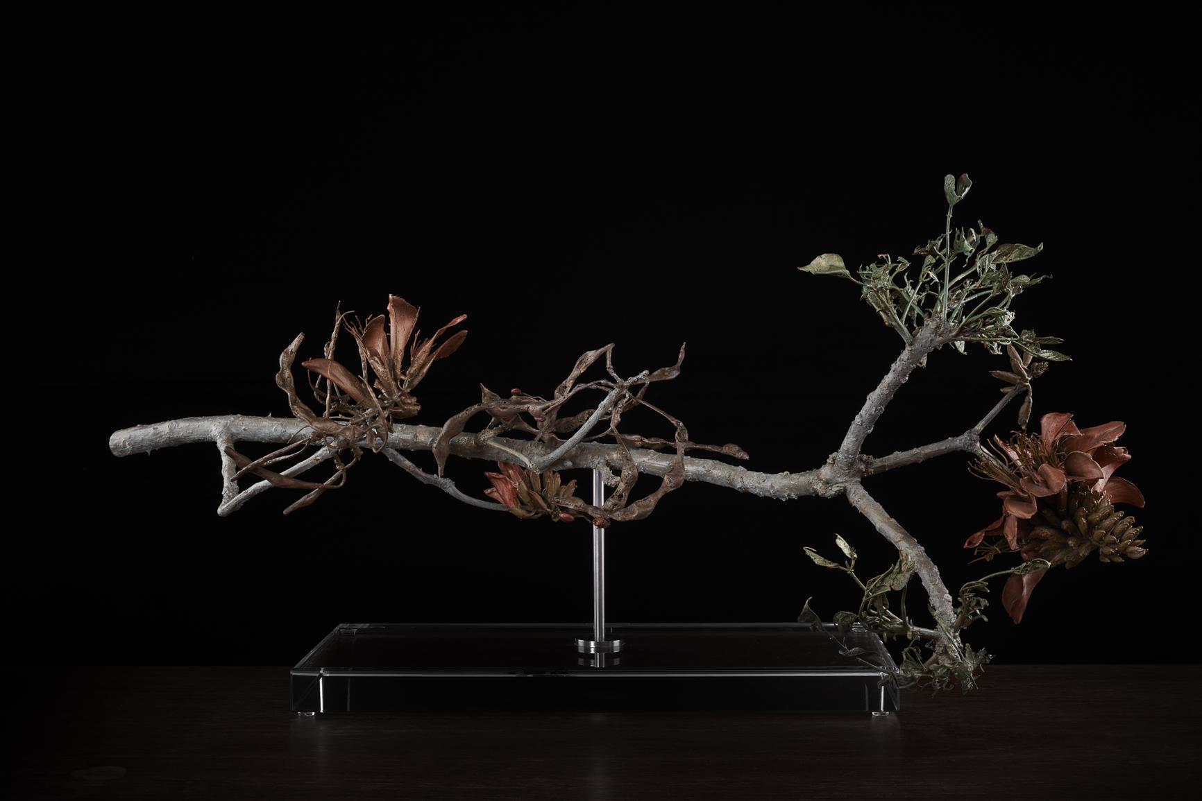 <i> Erythrina caffra (coral tree) </i>