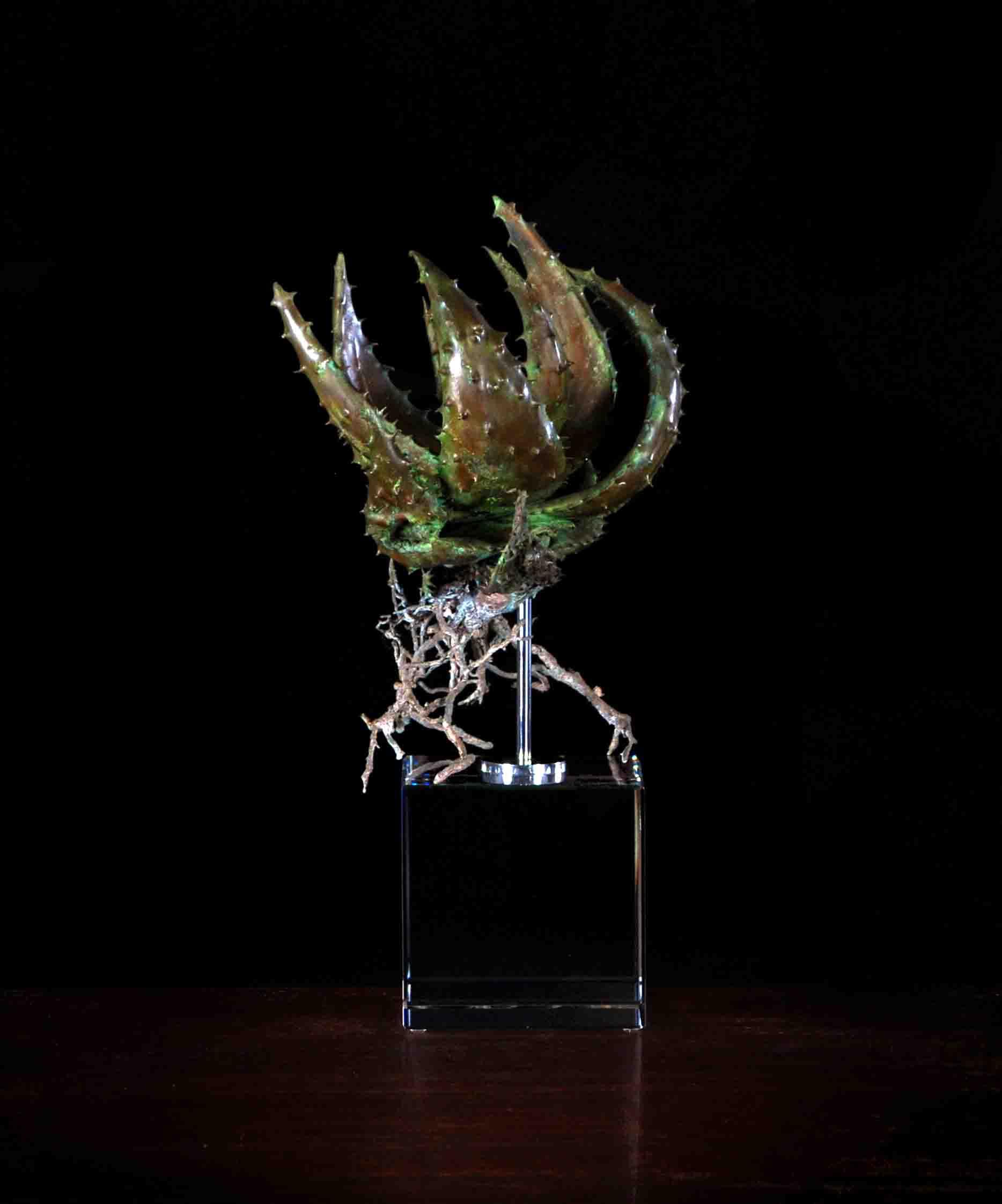 Aloe acculeata