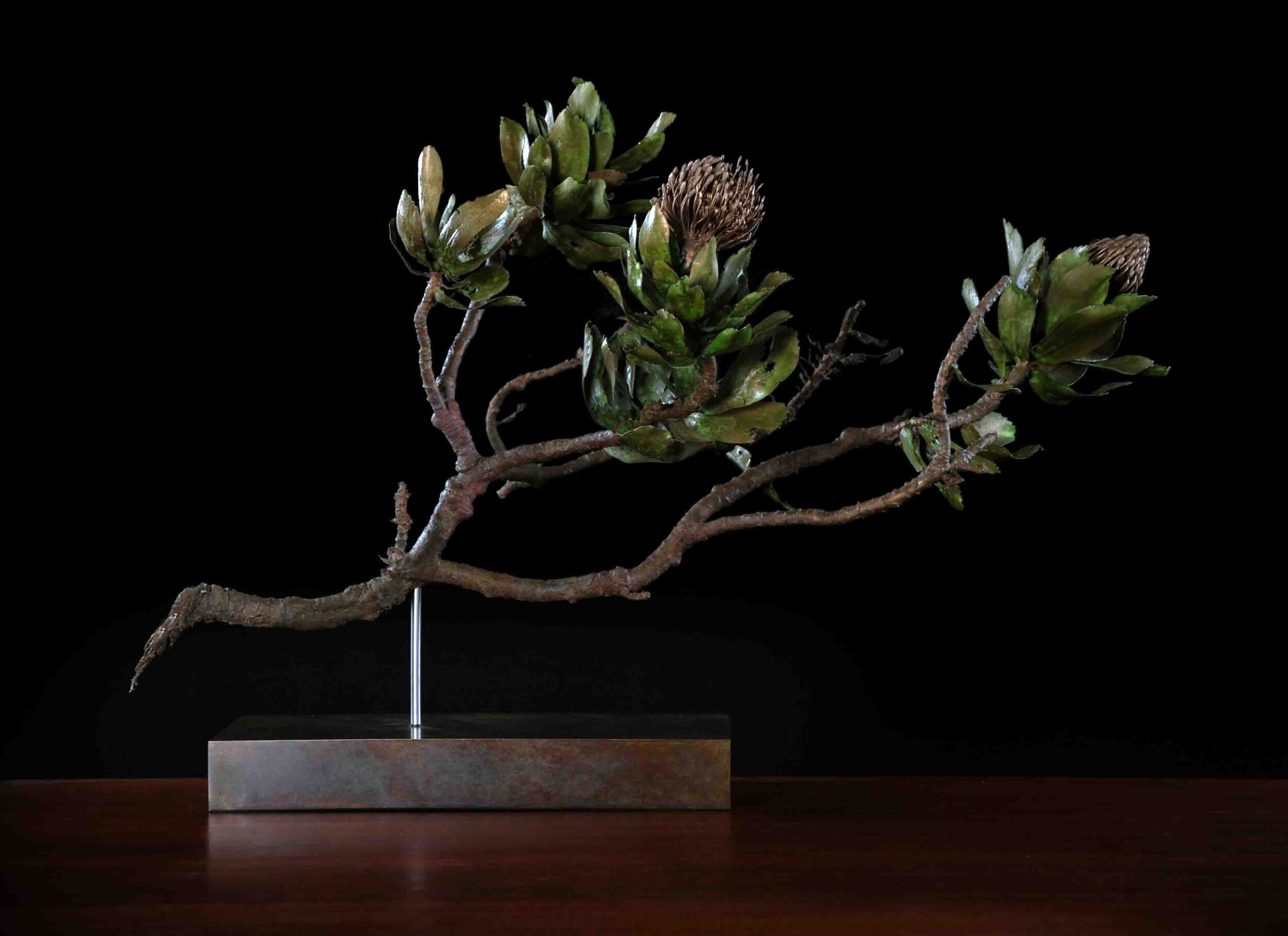 Leucospermum conocarpadendron