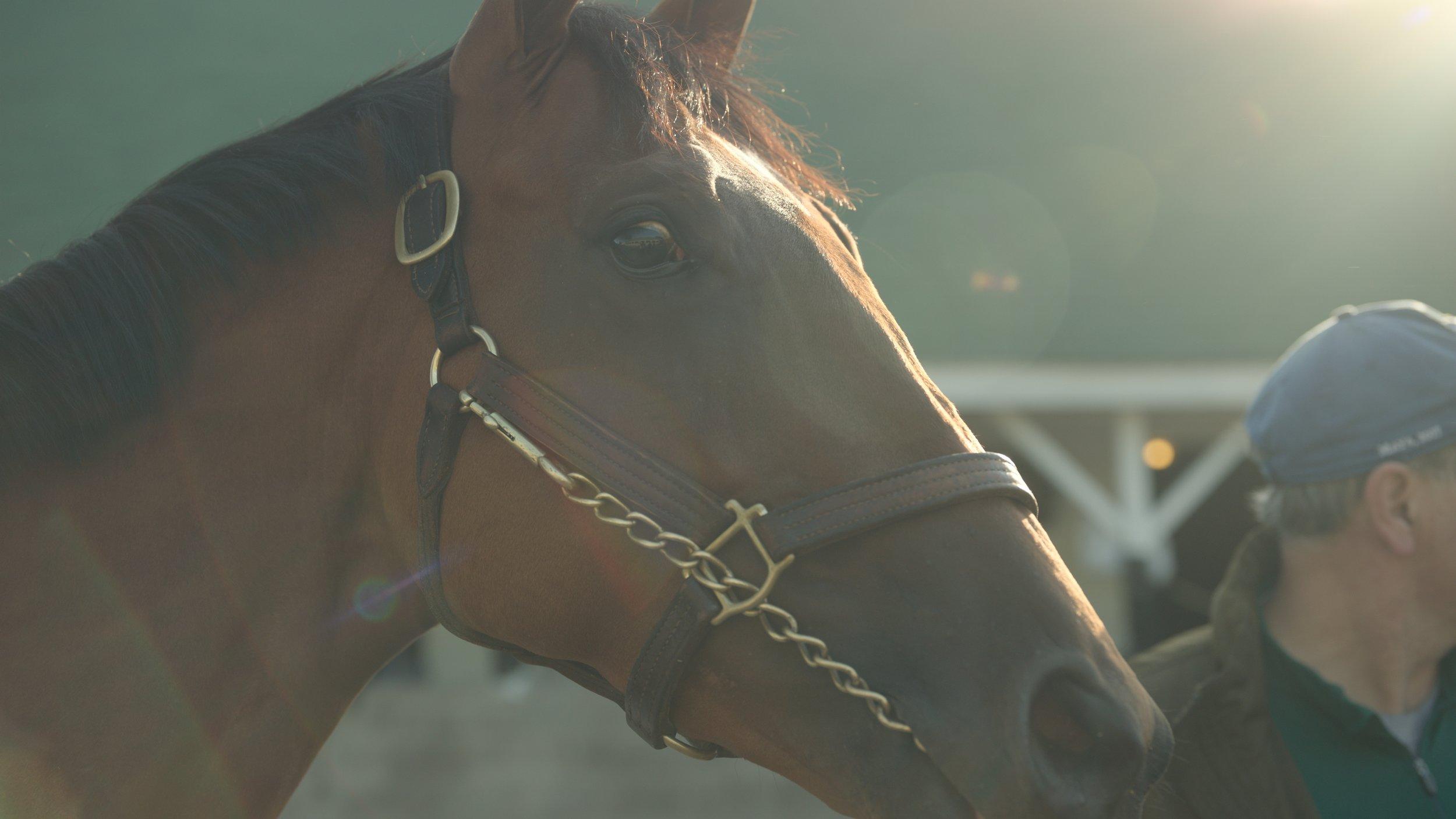 horses11_1.50.1.jpg