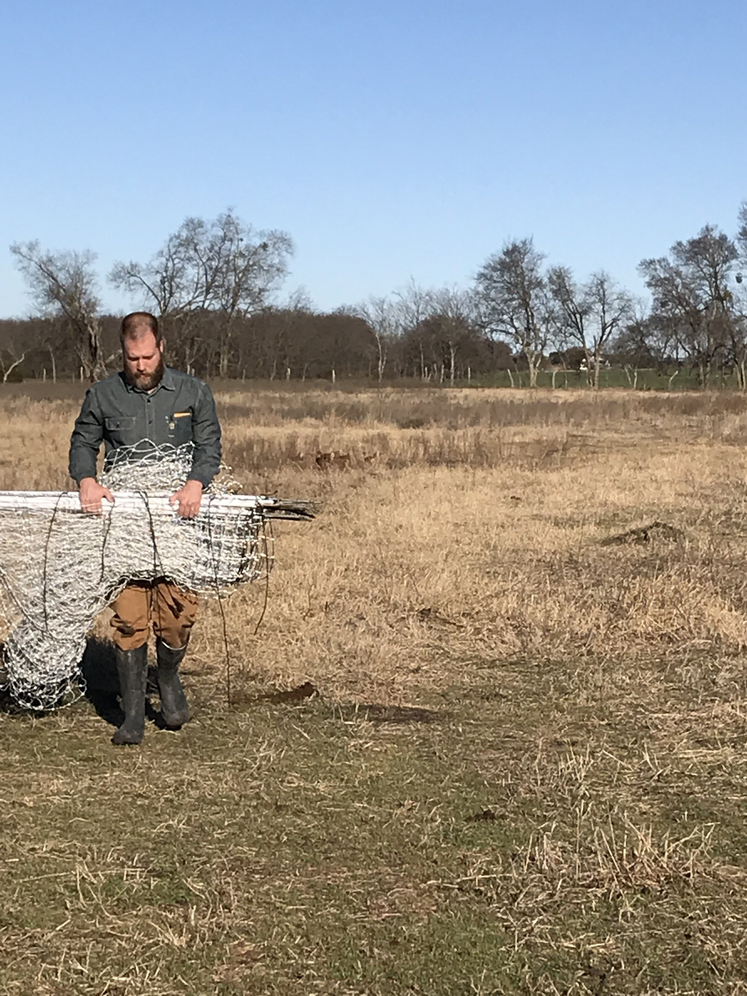Todd moving the electric netting that protects our laying hens from predators, while still allowing them the freedom to be out on pasture.