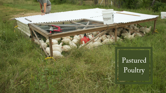 pasturedpoultry.png