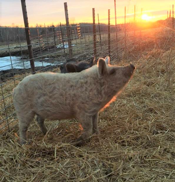 Heritage Pork -