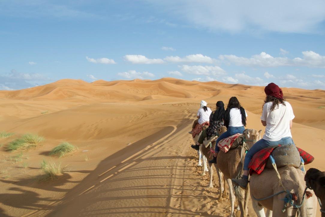 Desert Camel.jpg
