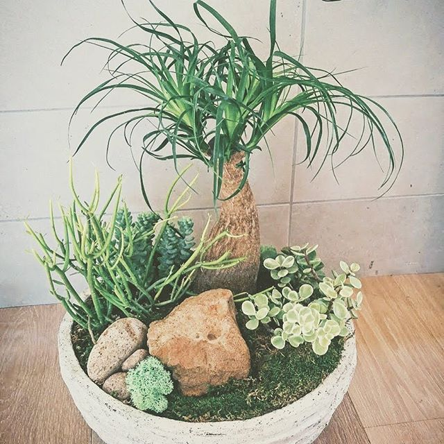 Dish Gardens for indoor or outdoor spaces are available to match your decor. Ask us for more information