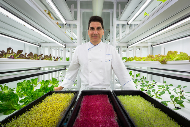 Grow House at the Ritz-Carlton Naples :   Chef George Fistrovich grows salad greens (and reds and yellows) inside   of a newly installed climate controlled environment.  (Photo provided by Ritz-Carlton.)
