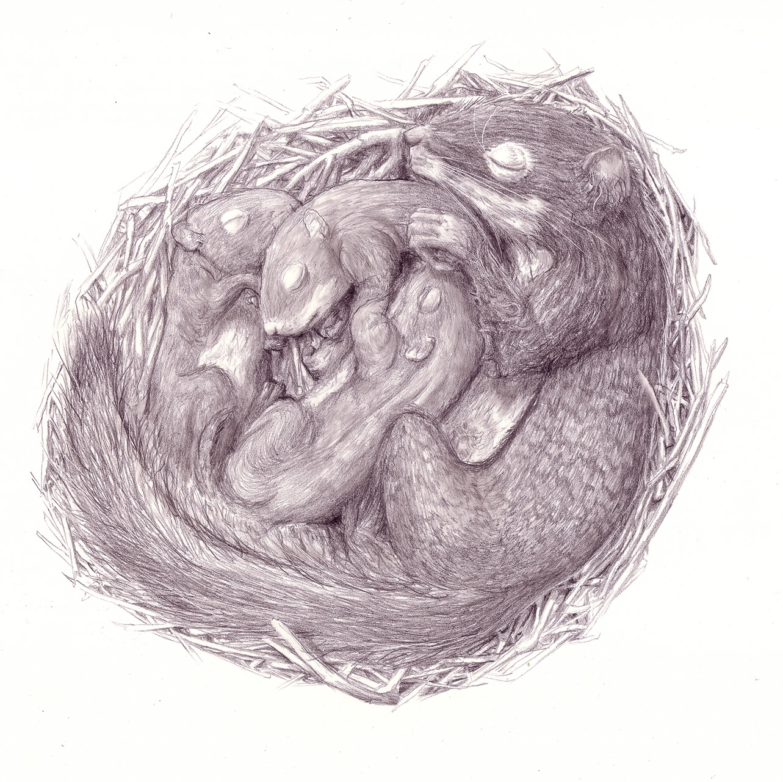 Thomas Squirrel_pencil_final_sm.jpg