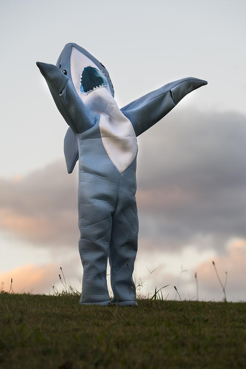 Shark of Silence, 2017