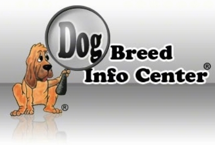 What you need to know               before getting a Dog?