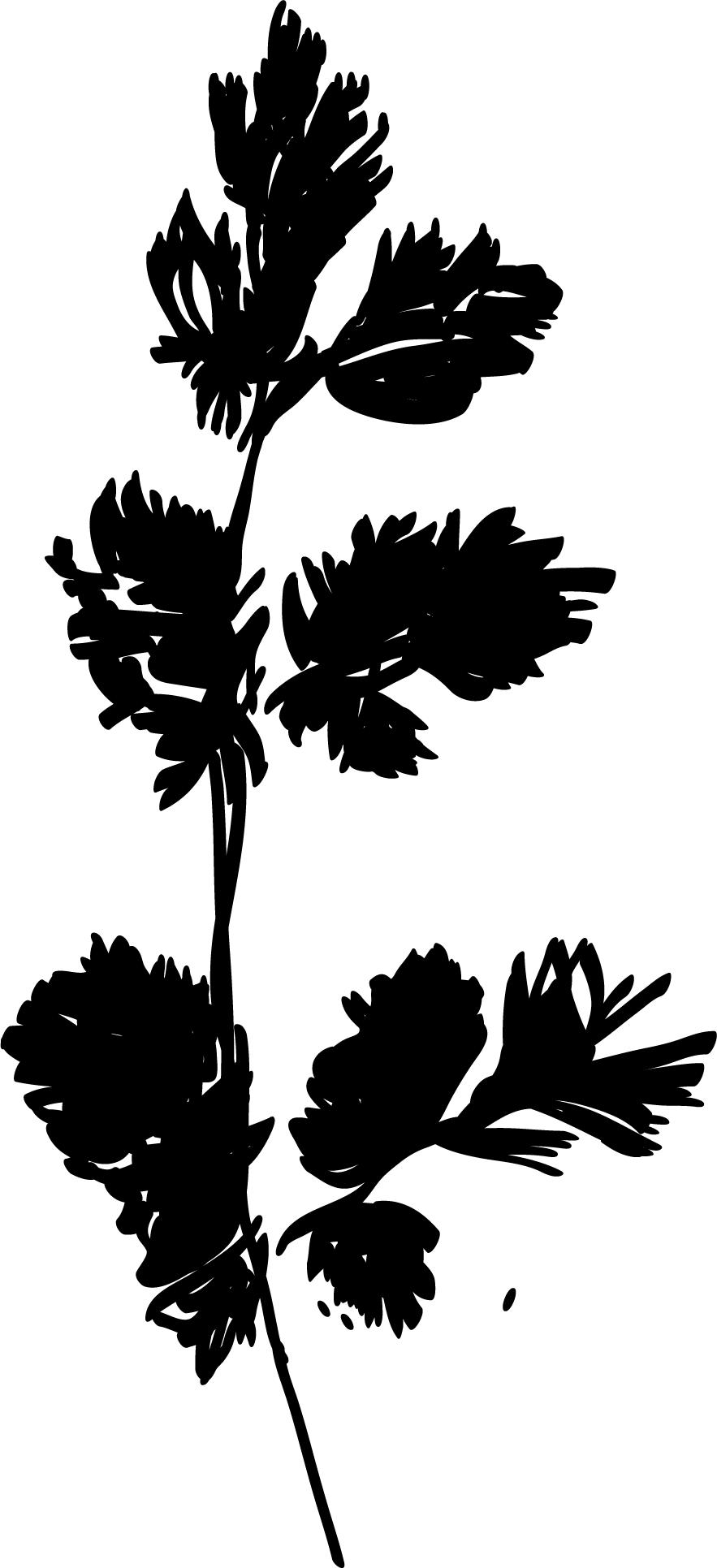 Re-drawn in Adobe Illustrator CC 2017