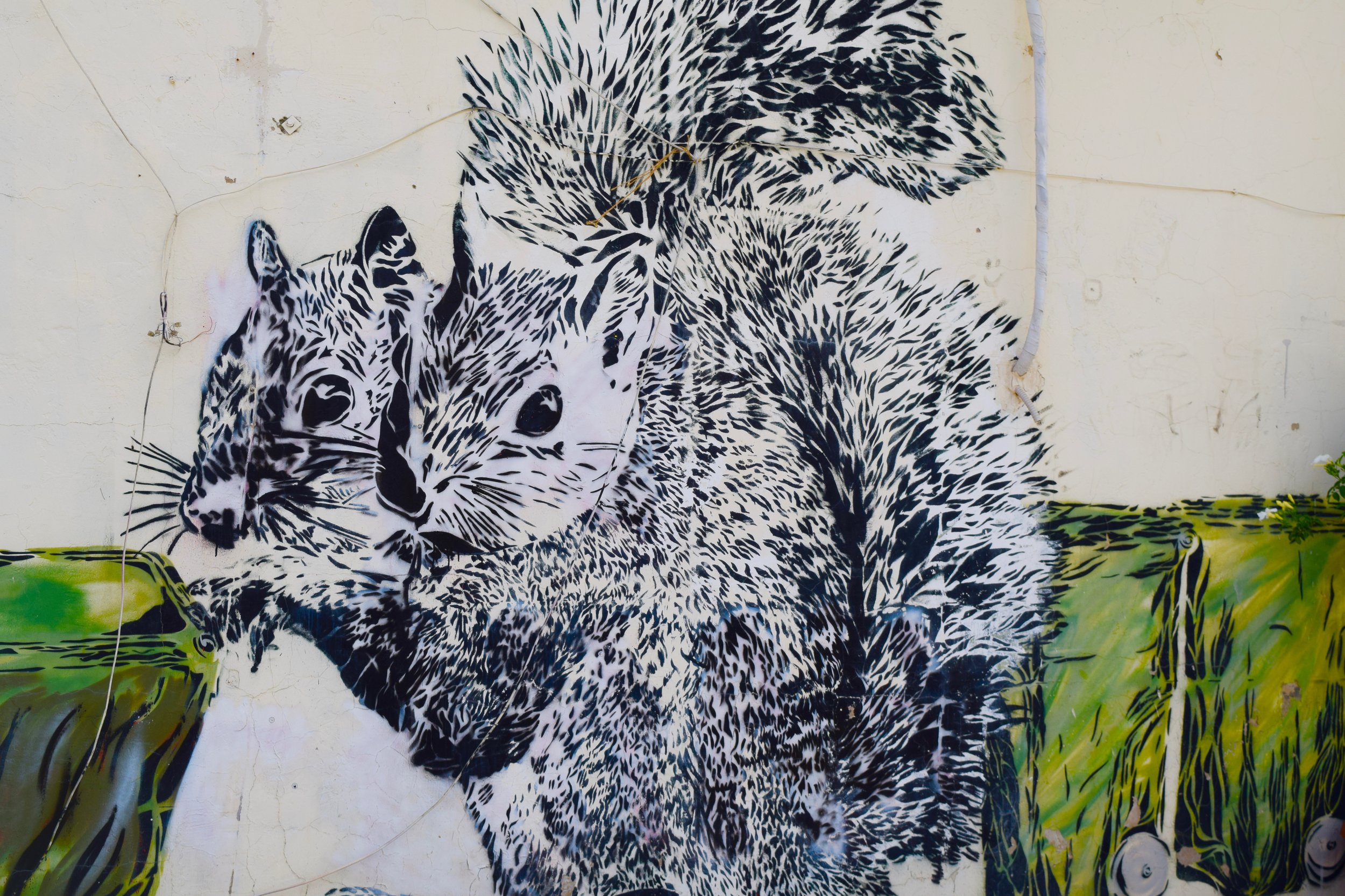 'The Squirrels'