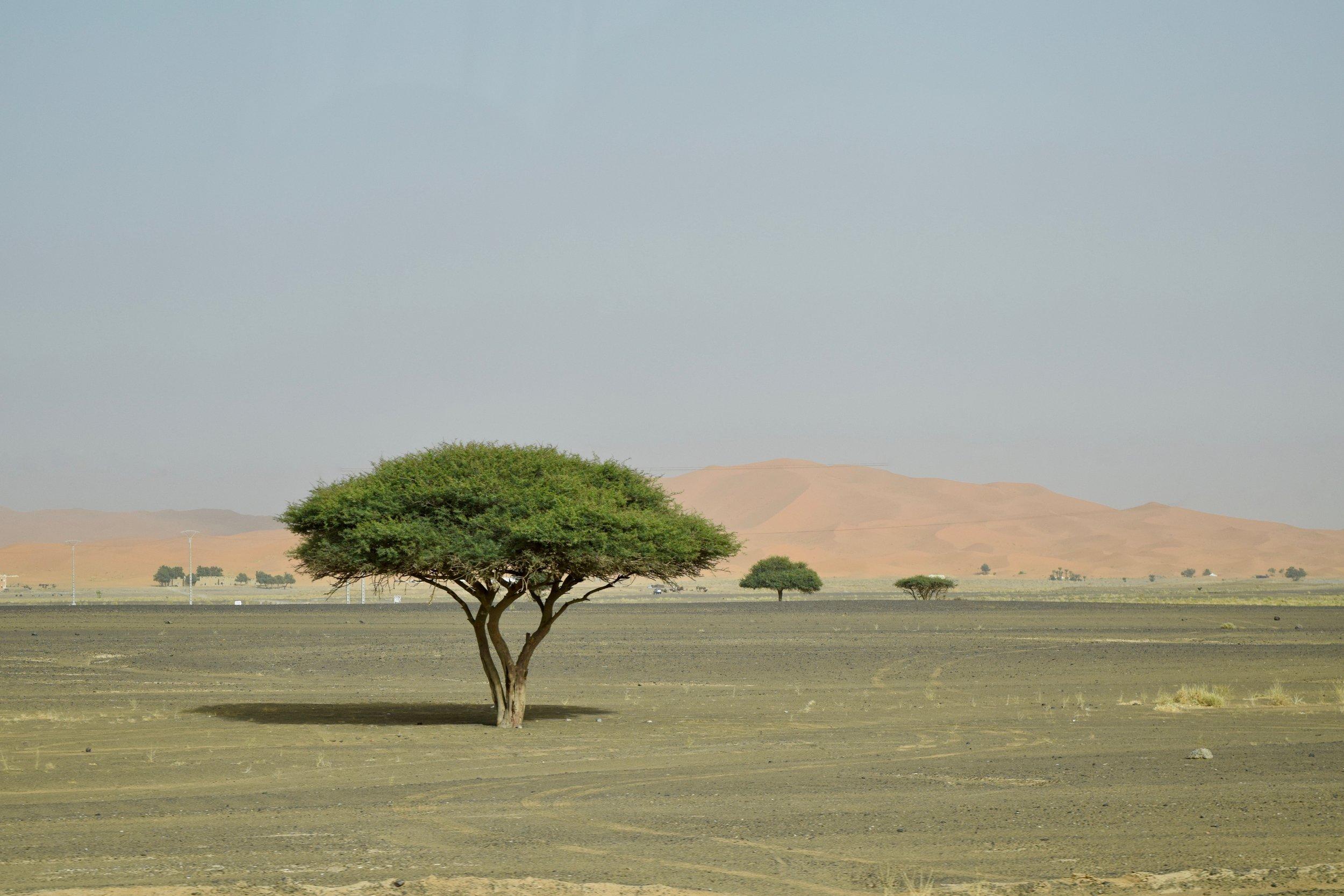 Entering the Sahara Desert