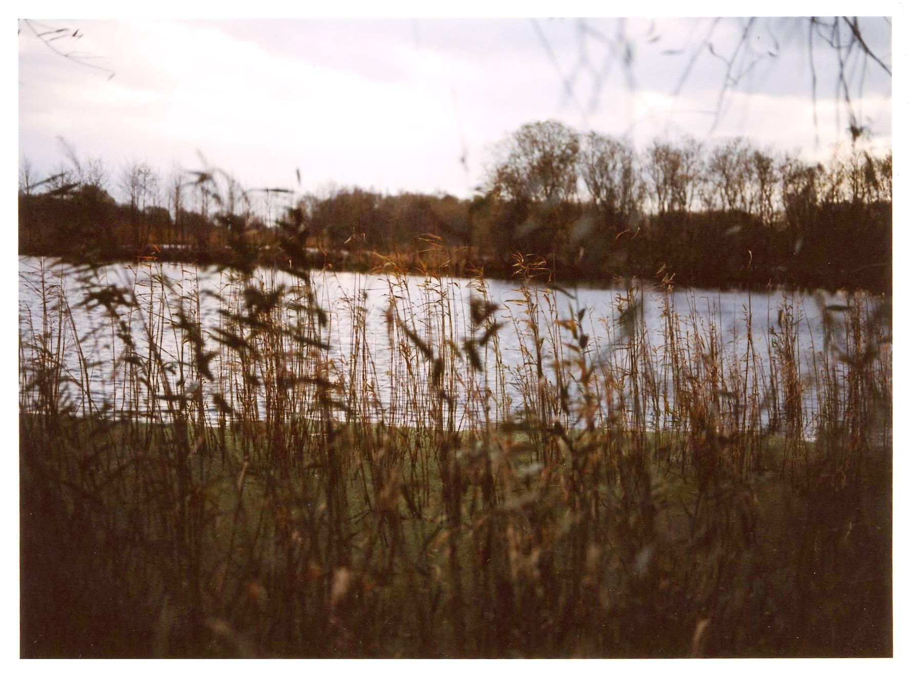 reeds 3.jpg