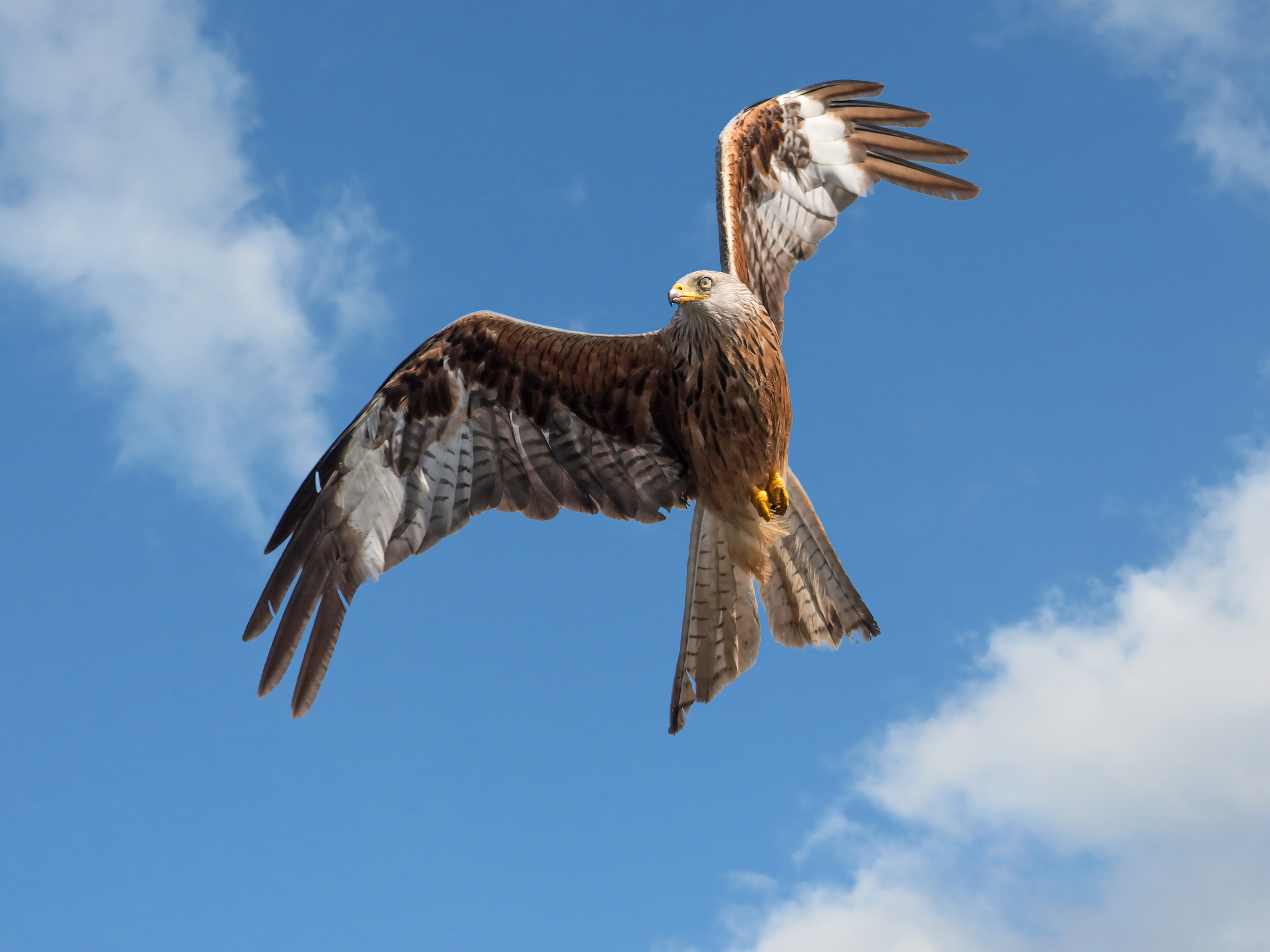 Underneath a Red Kite