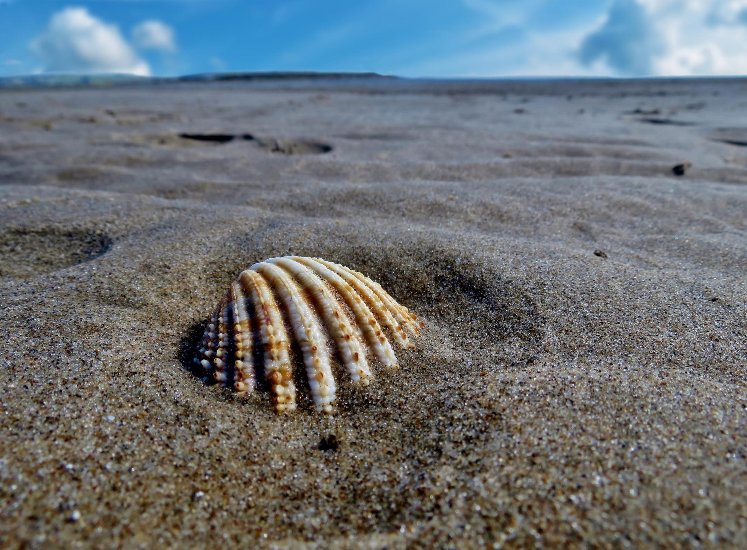Seashell at Aberdovey beach