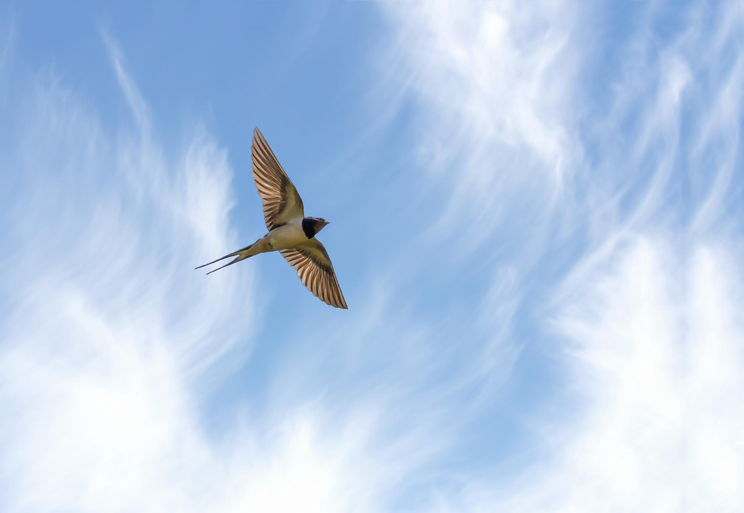 A Swallow flyover