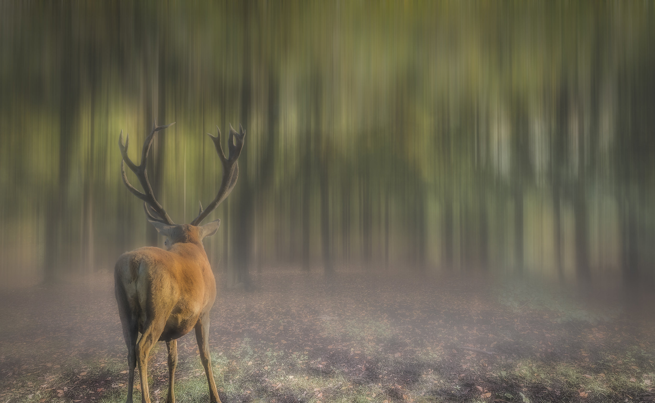 Red Deer stag in surreal woodland