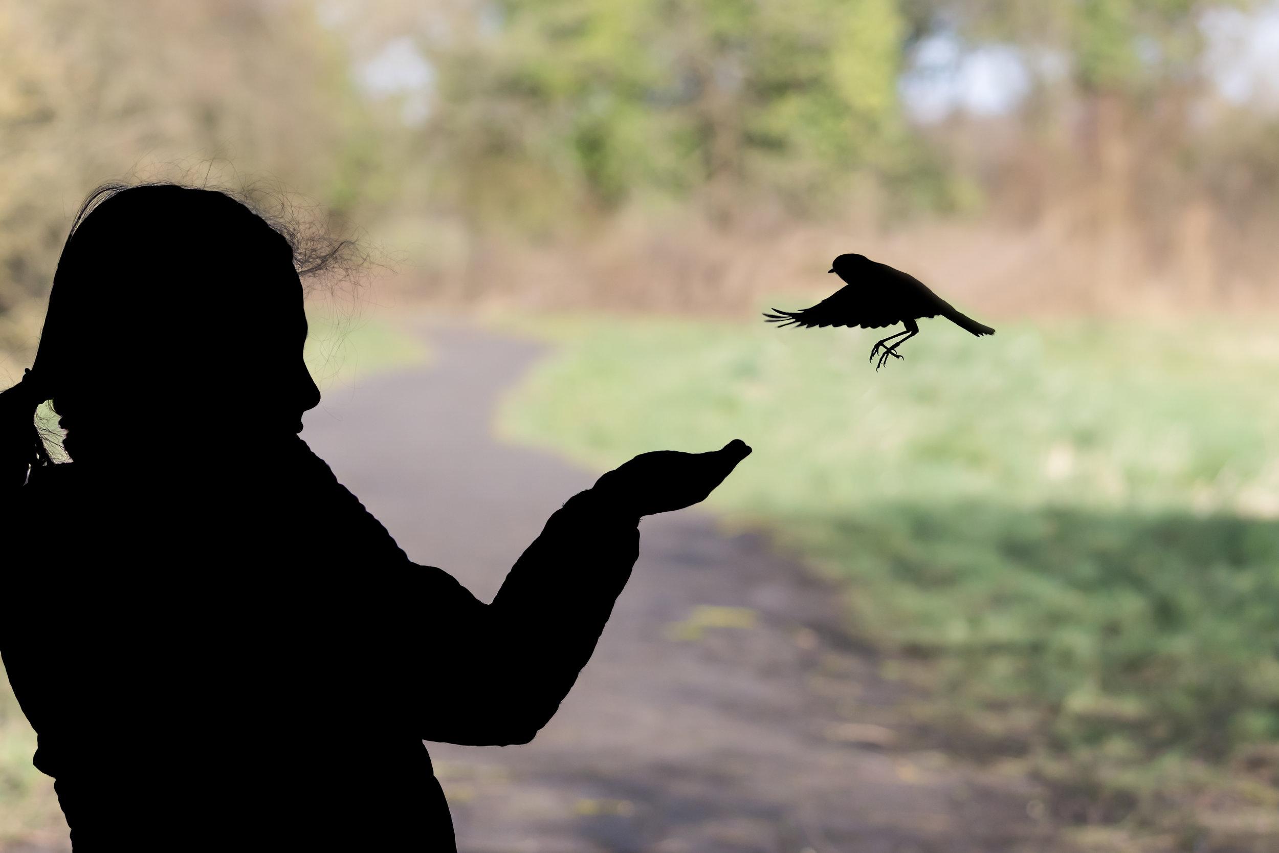 Feeding the Robins at RSPB Middleton Lakes