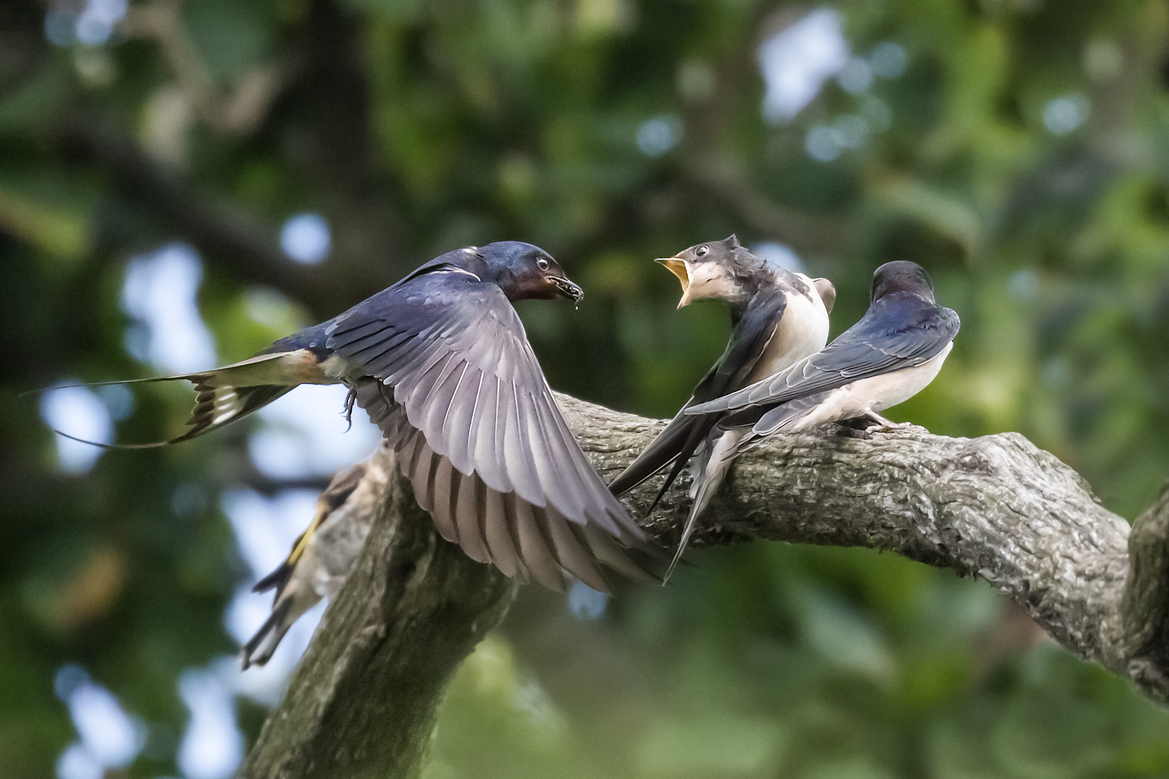 Feeding time #1