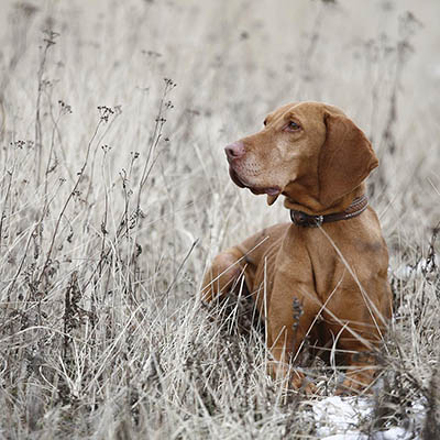 Buying Online-Searching Dog