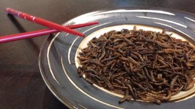 roasted mealworm snacks.jpg