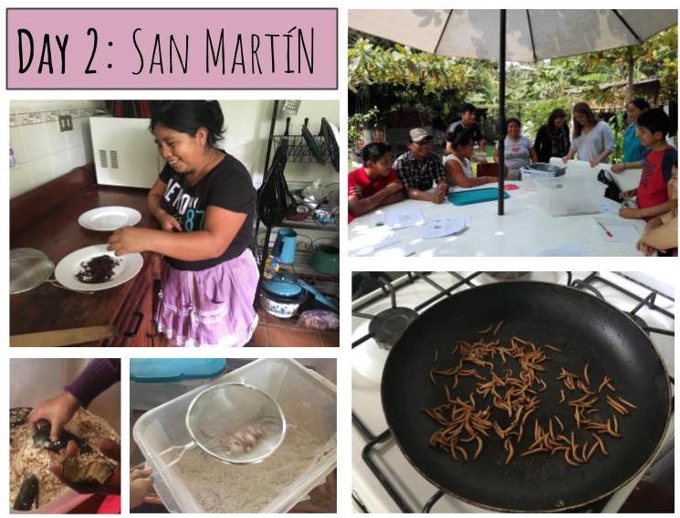 Its DAY 2 of the 12 Days of MealFlour where all donations are TRIPLED! In order to test mealworm farming in a variety of climates, we worked with our partner organization, PEILE, to train a family in the region of Retalhuleu on the coast of Guatemala. We worked with the whole family in San Martin to figure out the best way to adapt mealworm farming to the warm, humid climate. Through this collaboration, we found that in these areas, it is better to have a more open farm structure, and the mealworms do better when fed wheat flour instead of oats. Your donation will support our efforts to continue researching and innovating new ways to grow mealworms!