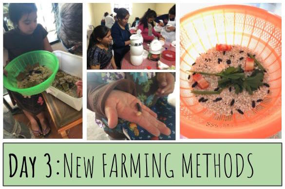 Mealworm farming is easy and simple! Farms can be made with a variety of different materials and set-ups. To find the best and most accessible farming method, MealFlour runs a large experiment using a variety of cheap and available materials in Guatemala. We're excited to share the results of this work with you in 2018! Your donation will support our efforts to continue researching and innovating new ways to grow mealworms for protein.