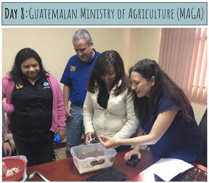 In August, MealFlour traveled to Guatemala City to meet with the Guatemalan Ministry of Agriculture (MAGA) and present our work. We discussed the environmental and nutritional benefits of mealworm farming, our program, and plans for the future. The government officials sampled mealworm cookies, learned about the farming process, and were very enthusiastic about the program. In the future, we hope to work with MAGA to hire a Masters student from the Universidad de San Carlos de Guatemala who will do their practicum with MealFlour.