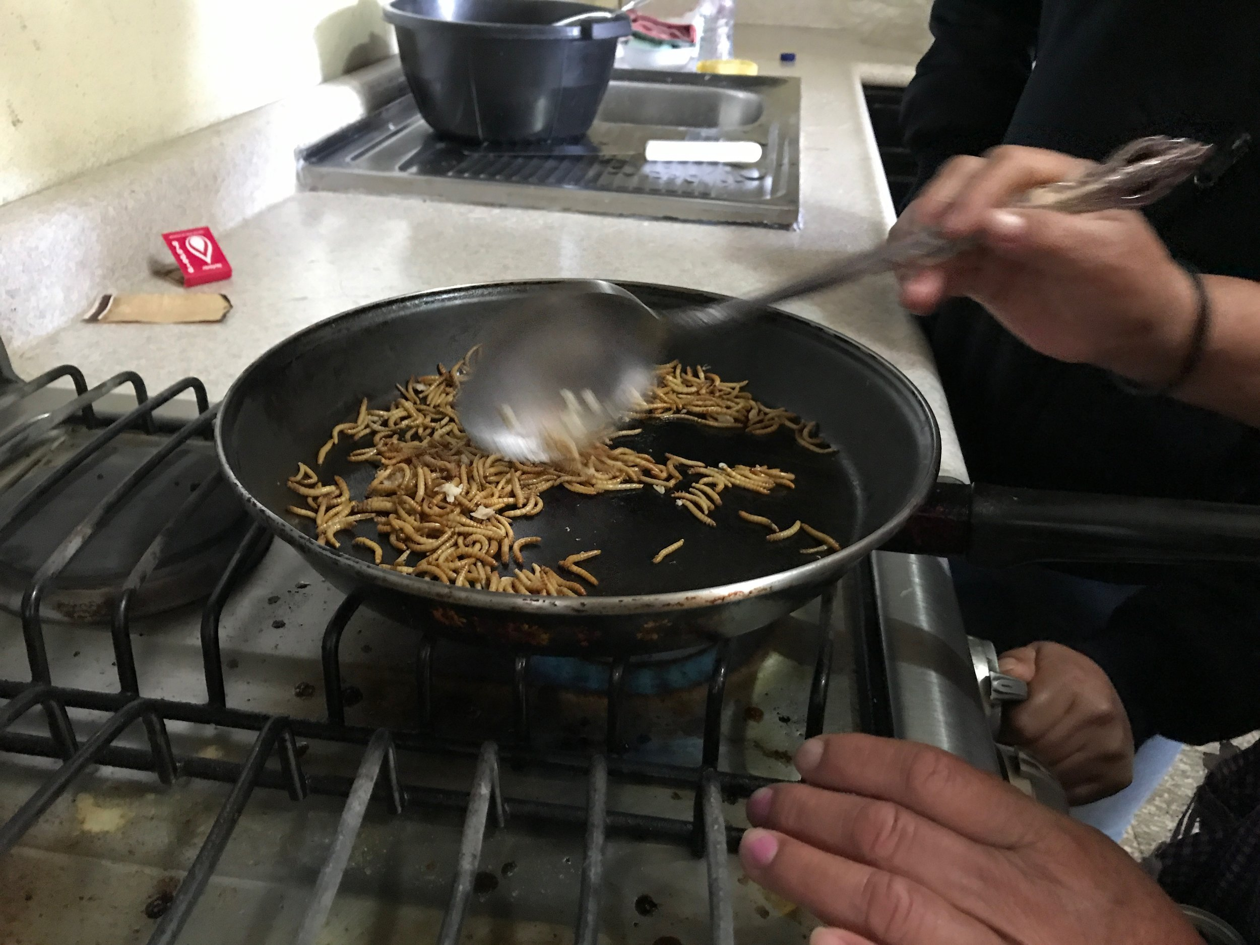 7:1:18 PEILE worms in pan and stove.JPG