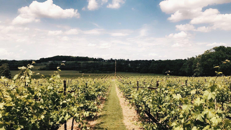 arrington vineyard.jpeg