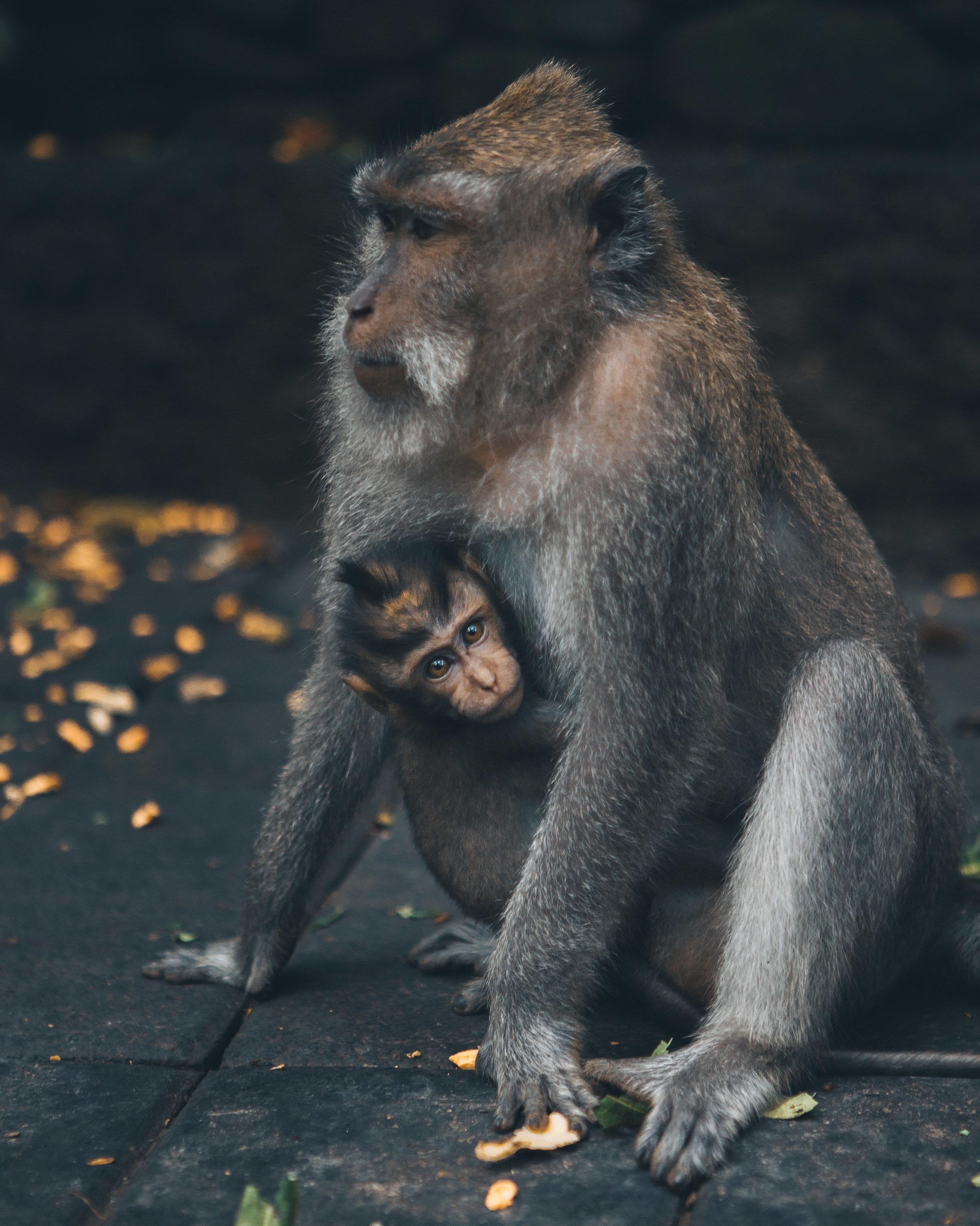 Bali monkey sanctuary.jpg