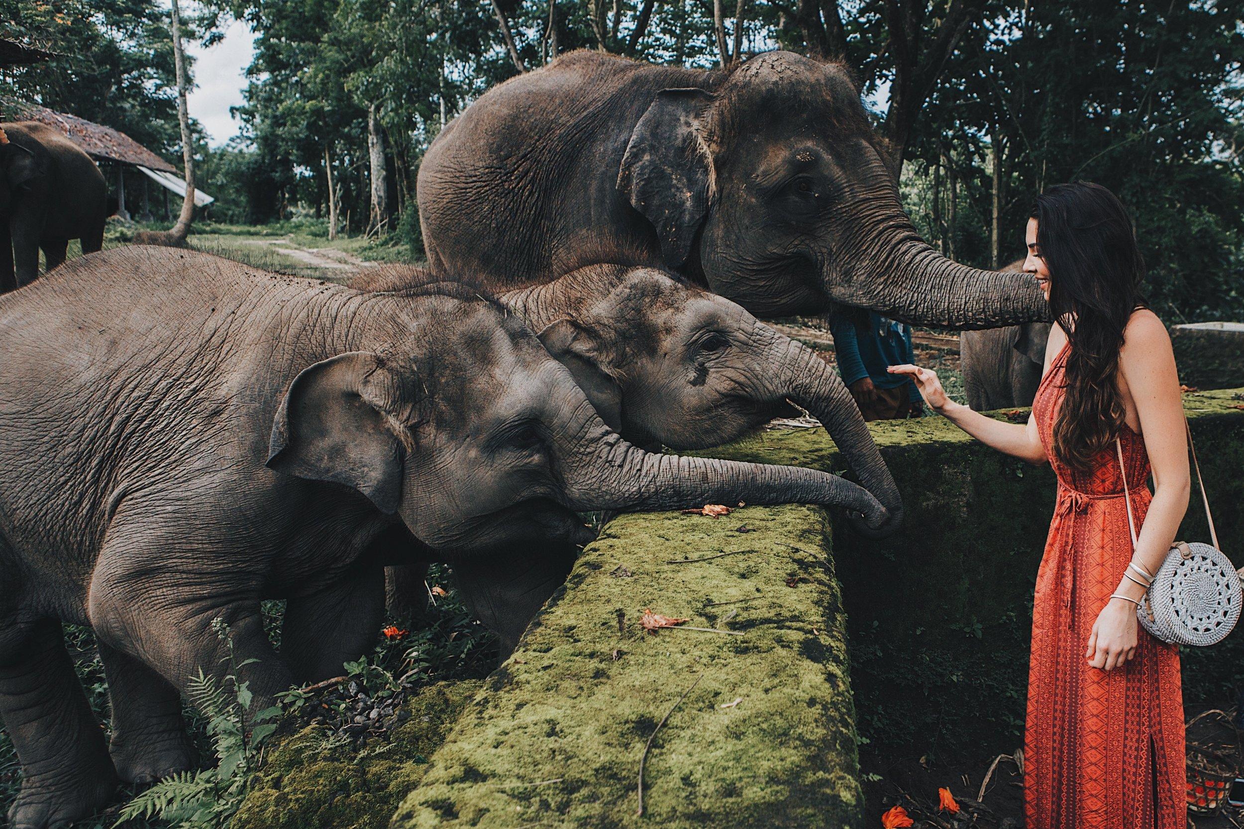 Elephant ride in ubud bali.JPG